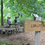 Log Life Explorers