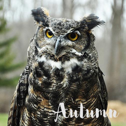 Autumn_nameIcon