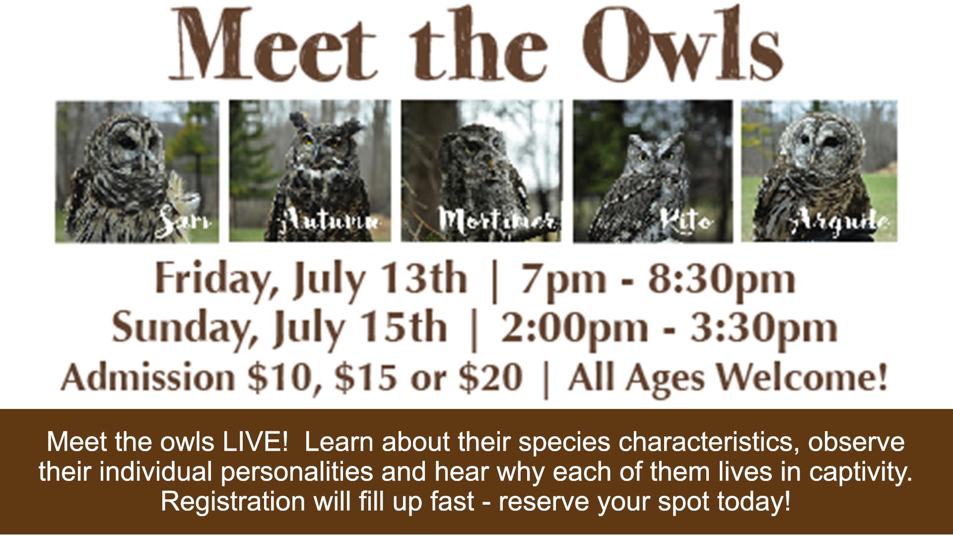 meet the owls_web